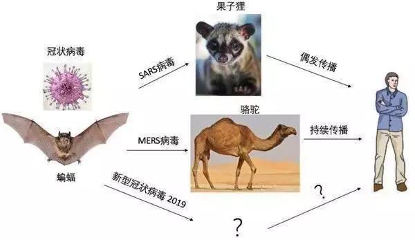 祸与福:中国人的蝙蝠文化观——兼及野味问题